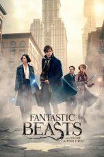 Fantastic Beast